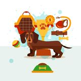 Dachshund care infographic concept with dog grooming. Isolated elements. Puppy training colorful cartoon poster vector illustration template for web sites, pet stock illustration