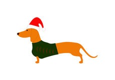Dachshund in Christmas hat and jersey Royalty Free Stock Photo