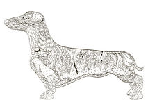 Dachshund coloring book for adults vector Stock Photos
