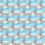 Dachshund cute dog stripe pattern Royalty Free Stock Photos