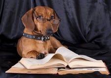Dachshund del perro en vidrios y libro Imagenes de archivo