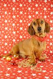 Dachshund do Natal Fotografia de Stock Royalty Free