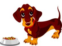 Dachshund dog. Cute dachshund dog near bowl of dog food Stock Images