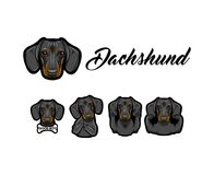 Dachshund dog. Bone, Muscles, Horns gesture, Middle finger, Rock sign. Dachshund with different gestures set. Dog breed. Vector. Dachshund dog. Bone, Muscles