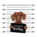 Dachshund Dog criminal. Police mugshot. Dog convict. Dog prison. Vector. Dachshund Dog criminal. Police mugshot. Dog convict. Dog prison. Vector illustration royalty free illustration