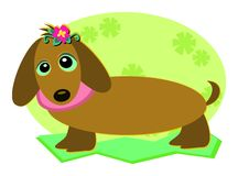 Dachshund Dog with a Flower Stock Images