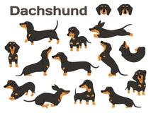 Free Dachshund,dog In Action,happy Dog Royalty Free Stock Image - 146781536