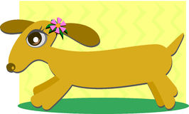 Dachshund Dog with Pink Flower Stock Photos
