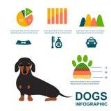 Dachshund dog playing infographic vector elements set flat style symbols puppy domestic animal illustration vector illustration