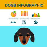 Dachshund dog playing infographic vector elements set flat style symbols puppy domestic animal illustration vector illustration