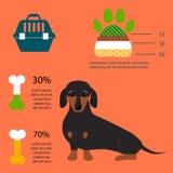 Dachshund dog playing infographic vector elements set flat style symbols puppy domestic animal illustration royalty free illustration