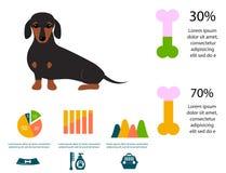 Dachshund dog playing infographic vector elements set flat style symbols puppy domestic animal illustration stock illustration