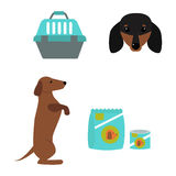 Dachshund dog playing vector illustration elements set flat style puppy domestic pet accessory. Dachshund dog playing vector illustration elements set flat vector illustration