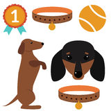 Dachshund dog playing vector illustration elements set flat style puppy domestic pet accessory. Dachshund dog playing vector illustration elements set flat stock illustration
