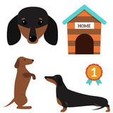 Dachshund dog playing vector illustration elements set flat style puppy domestic pet accessory. Dachshund dog playing vector illustration elements set flat royalty free illustration
