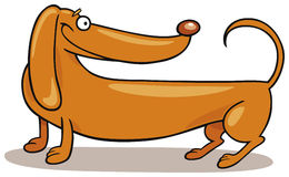 Dachshund Dog smiling. Illustration of happy Dachshund Dog smiling