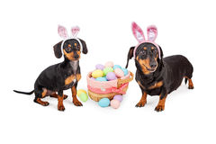 Dachshund Easter Celebration Royalty Free Stock Image