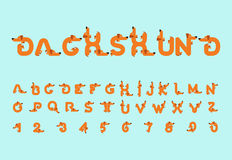 Dachshund font. Dog alphabet. Lettering home animal. ABC pet.  royalty free illustration