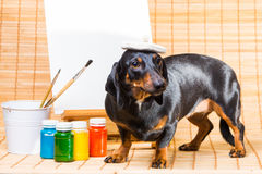 Dachshund in hat of artist near easel with  clean canvas Royalty Free Stock Photos