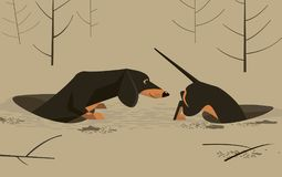Dachshund in the hole. Very long dachshund hunts in the hole Stock Images