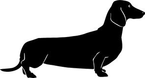 Dachshund Illustration. Line Art Illustration of a Dachshund Stock Images
