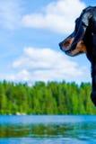 Dachshund on a lake Stock Photo