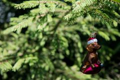Dachshund likes to Christmas decoration for Xmas tree with blurred branch stock photography