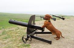 Dachshund and medium machine-gun outdoors Stock Image