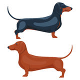Dachshund pet  illustration isolated on white background Stock Images
