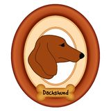 Dachshund Portrait, Wood Frame, Dog Bone Royalty Free Stock Images