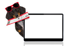 Dachshund sausage dog on vacation Royalty Free Stock Photography