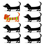 Dachshund - think differently Stock Photo