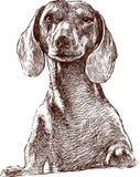 dachshund vector illustration