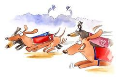 Dachshund verfolgt Rennen Stockfoto