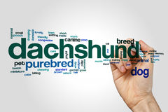 Dachshund word cloud on grey background Stock Photography