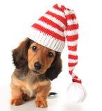 Dachshundhunde Lizenzfreie Stockbilder