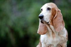 Dachshundjagdhund Lizenzfreies Stockbild