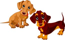 Dachshunds. Two isolated dachshunds on the white background Stock Image