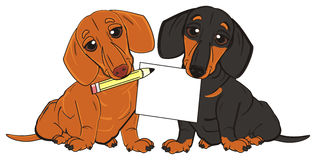 Dachshunds ready to write Royalty Free Stock Image