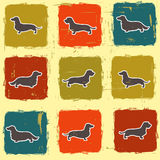 Dachshunds varieties  retro seamless pattern Stock Photos