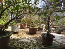 Dachspitze Gartenarbeit Stockfotografie