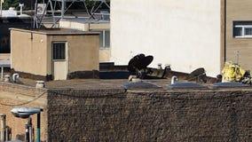 Dachspitzen in der Stadt von Tabriz stock video footage