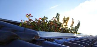 Dachspitzen-Garten Lizenzfreies Stockbild