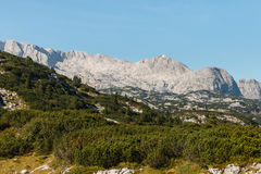Dachstein断层块在有岗松灌木的奥地利阿尔卑斯 免版税库存图片