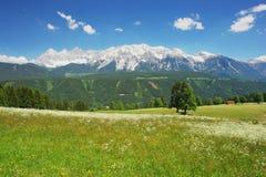 Dachstein, Austria. View from the meadow in mountains Dachstein, Austria Stock Image