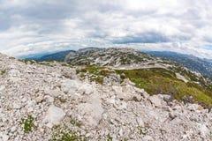 Dachstein-Gebirgspanorama mit Schafen Stockfoto