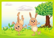 Dacing Rabbits Royalty Free Stock Photos