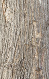 Dackground Holz Lizenzfreie Stockbilder