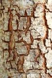 Dackground trä Arkivfoto