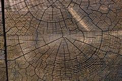 Dackground trä Arkivbilder